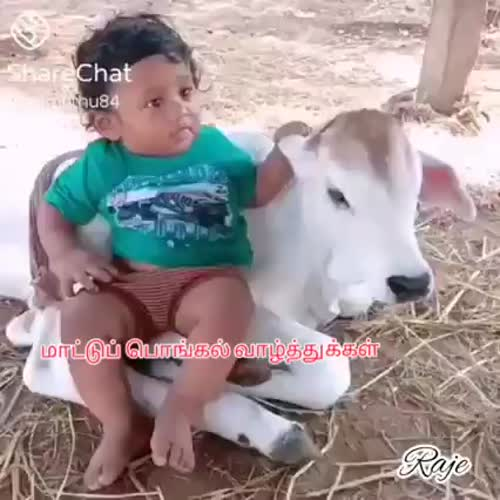 Happy Mattu Pongal